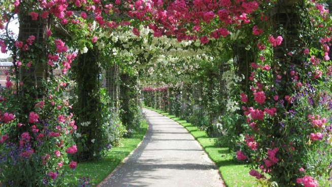 The Rose Pergola At Kew Gardens