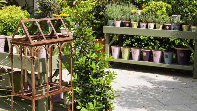 Garden area of shop