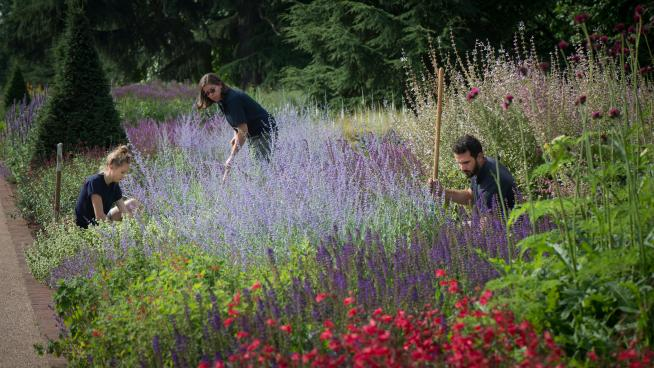 Kew Diploma students working on the Great Broad Walk Borders