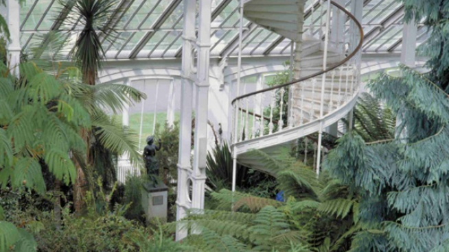Photo of plants inside the temperate house