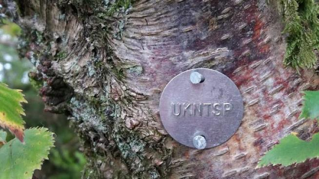Image showing a UKNTSP tree tag indicating seed has been collected from this tree for the project