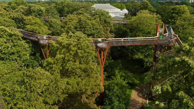 Aerial view of the Treetop Walkway