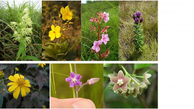 image showing the flowers chosen for the Regional Flower Campaign