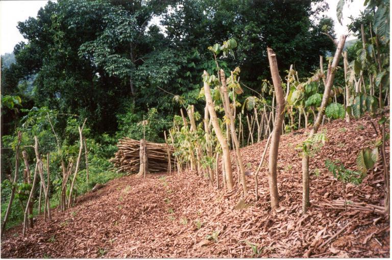 Photo of farmed hillside