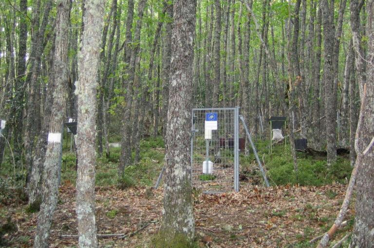 Mycorrhizal sampling