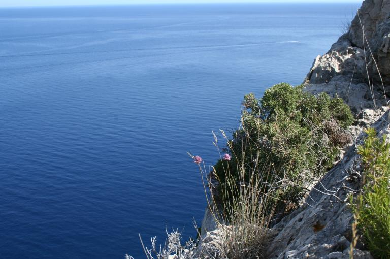 Picture of plant growing on steep cliff with the sea in the background