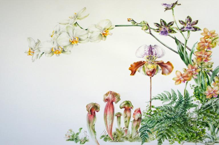 Anita Barley Orchid Festival 2015