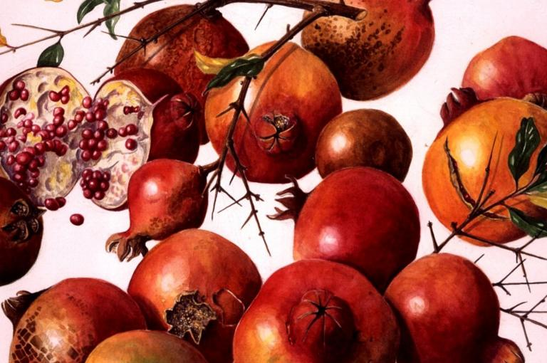 Pomegranates by Ann Schweizer from the Shirley Sherwood Collection
