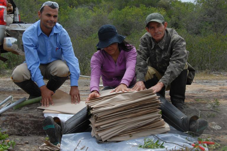 Pressing specimens as part of the botanical inventory