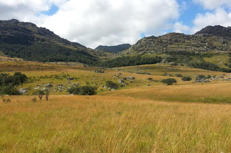 Image showing the Chimanimani Mts., an area of endemism which lies on the Mozambique-Zimbabwe border