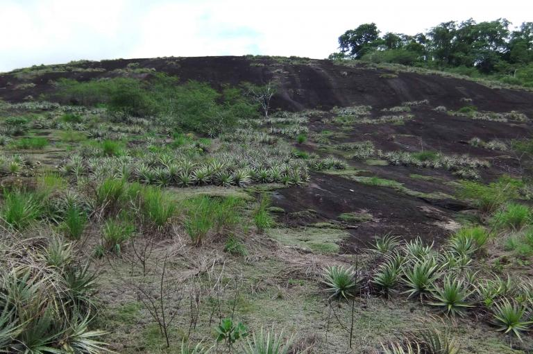 Image showing Santa Rosa dome inselberg is a granitic rock formation with a plant mat dominated by Bromeliads.