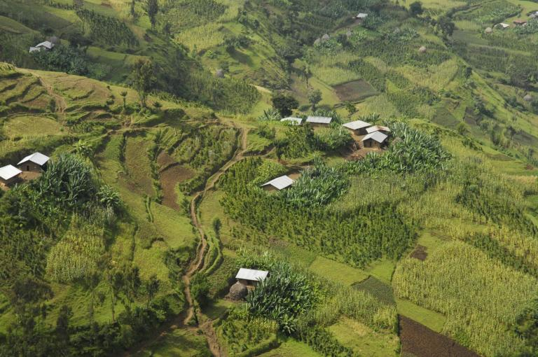 Enset in the Agri-landscape of South West Ethiopia