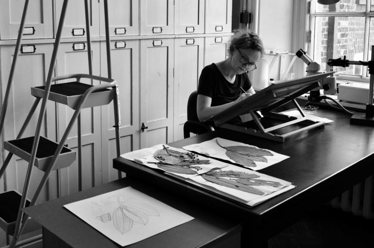 Hazel Wilks working on an illustration. Photographer Sandrine Vivès-Rotger