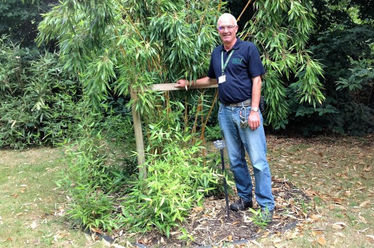 Ray Townsend with Phyllostachys aureosulcata