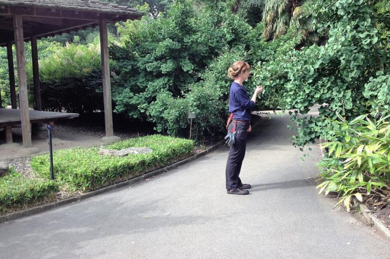 Sophie Walwin in Kew's Bamboo Garden