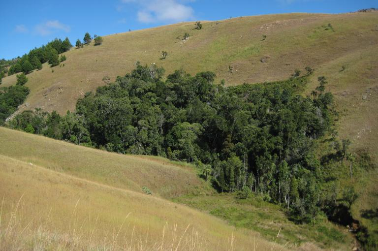 Photo of gallery forest in Madagascar