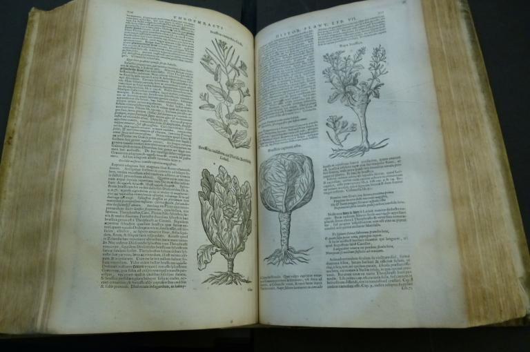 Photo of pages from a 1664 edition of Theophrastus.