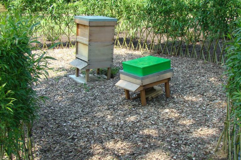 Bee hives at Wakehurst