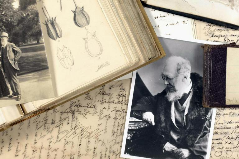 Collage of Joseph Hooker's drawings and correspondence