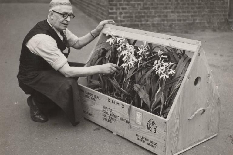 Wardian case received by Kew from Hong Kong