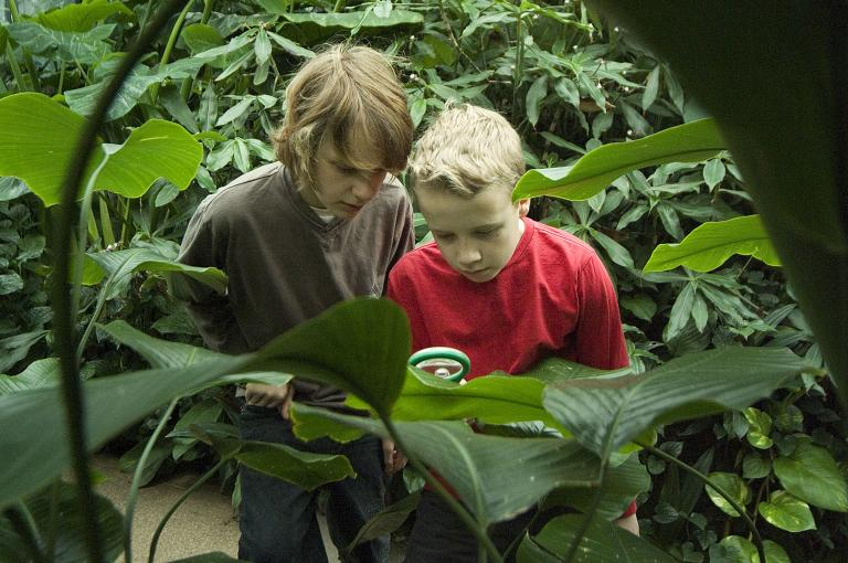 Students investigate rainforest plants