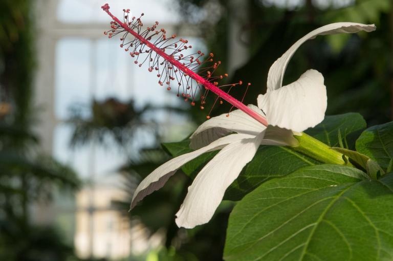 Kew's living rainforest