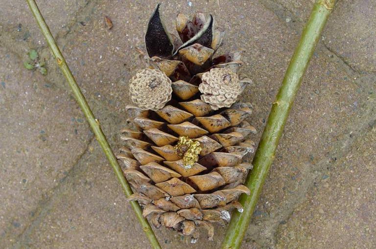 Cone owl art