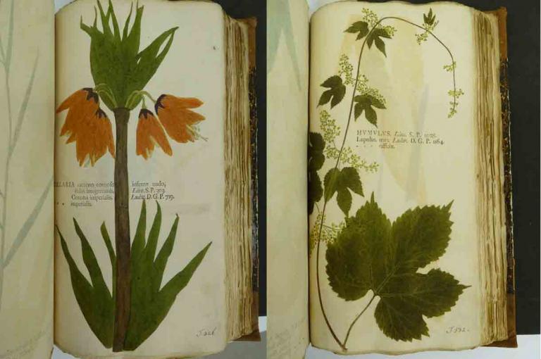 Photo of Botanica in originali by Johann Hieronymus Kniphof