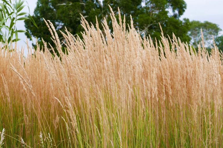 The Grass Garden at Kew