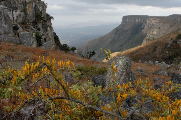 The Lubango Escarpment in SW Angola – an area of high diversity and endemism still revealing new species (Photo: D. Goyder)