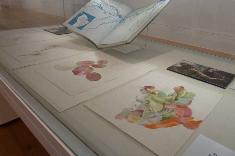 Showcase displaying Margaret Mee field sketches and photographs