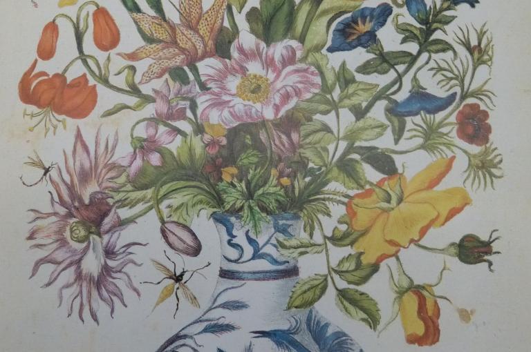 Photo ofan illustration from Maria Sibylla Merian's Neues Blumenbuch of 1675.