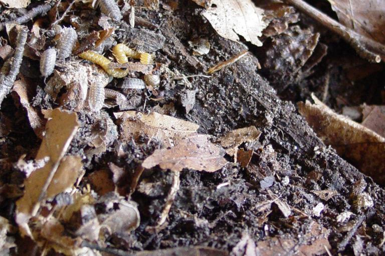 Minibeasts in leaf litter