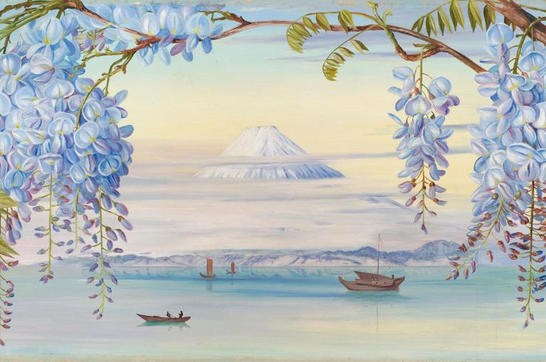 Marianne North - Distant View of Mount Fujiyama, Japan, and Wistaria