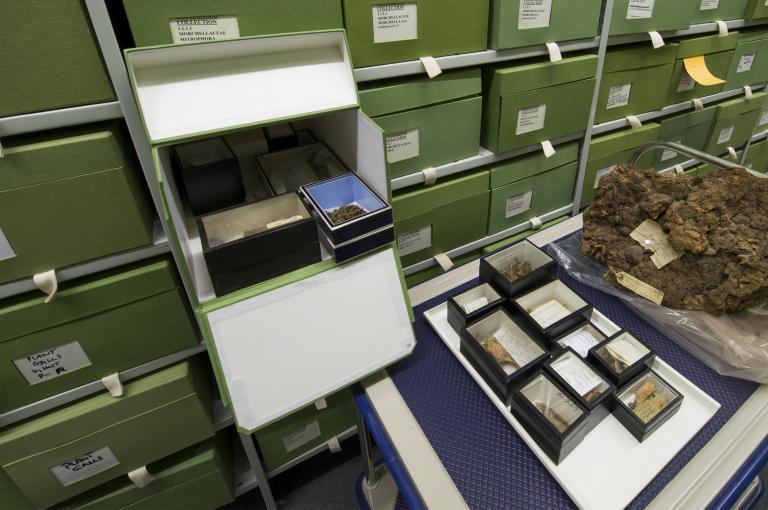 Behind the scenes in Kew's Fungarium