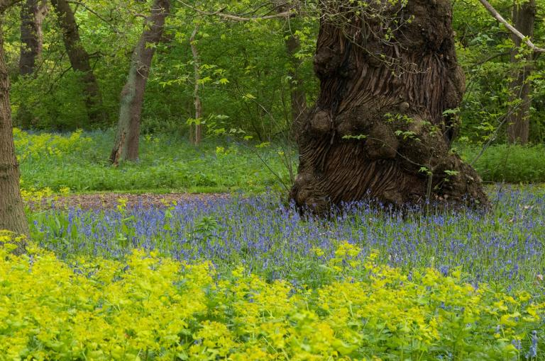 Natural Area at Kew