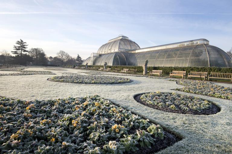 Palm House parterre in winter