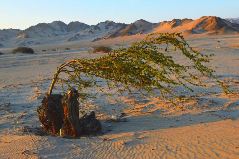 Sustaining life and agriculture in the Peruvian desert (O. Whaley)