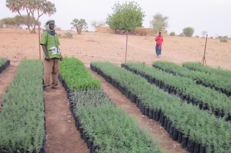 Village technicians' tree nursery for the Great Green Wall in Djibo, Burkina Faso (Photo: M Sacande)
