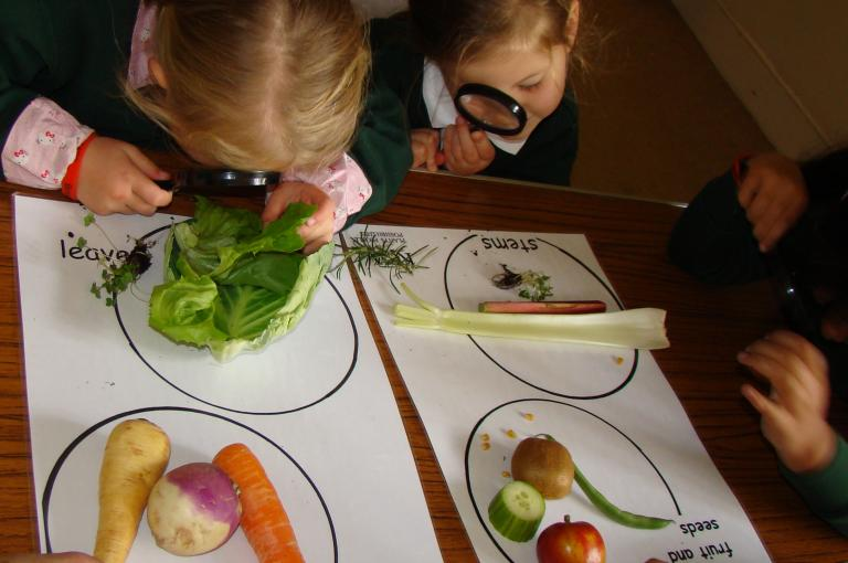 Students investigate plant parts