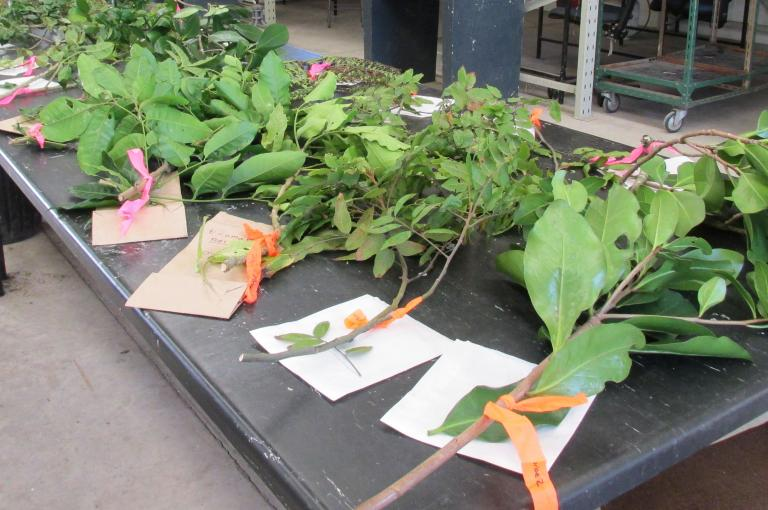 A lab full of plant samples ready to burn (Photo S. Wyse)