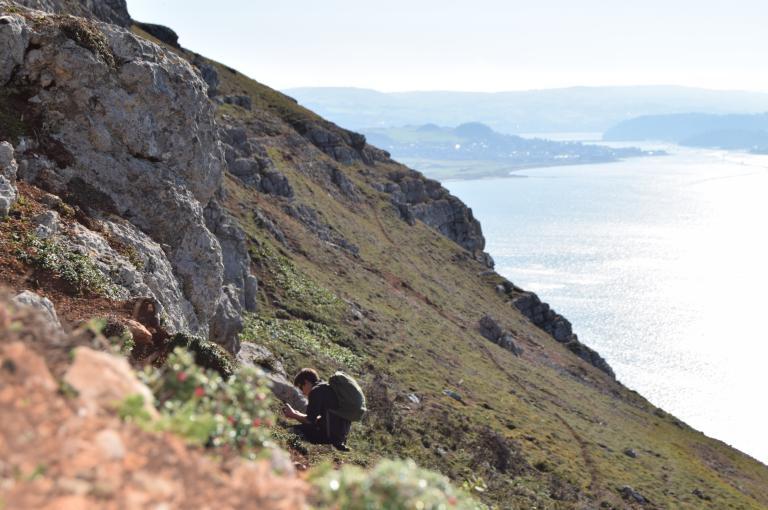 Scrub on a sea cliff