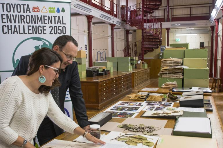 Serene Hargreaves (Kew) and Steve Hope (Toyota) in Kew's Herbarium
