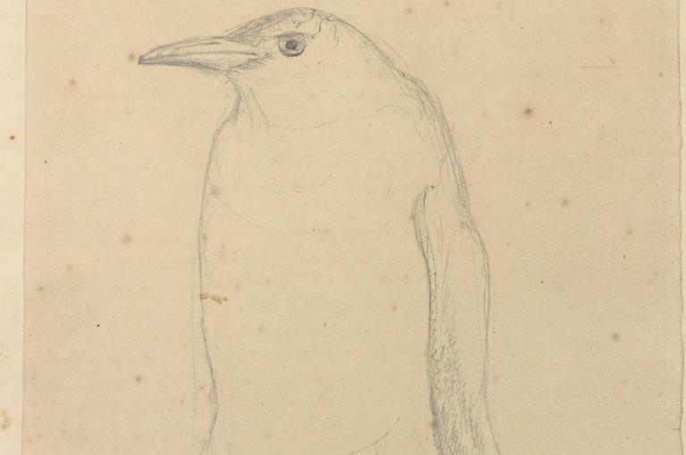 Sketch of a penguin by Sir Joseph Hooker drawn on the Antarctic voyage