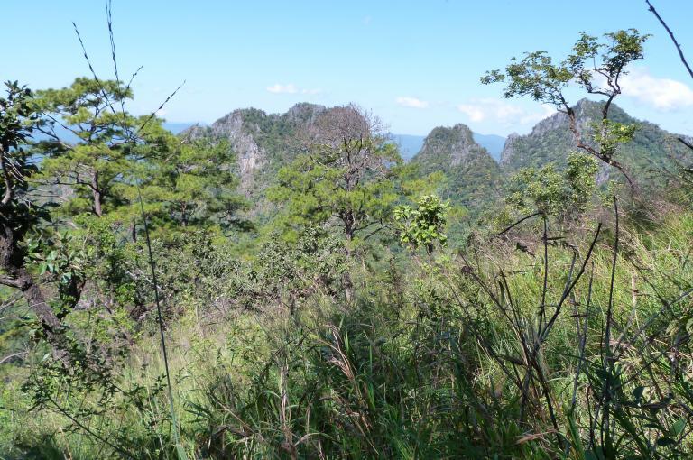 Thailand (Image: Ruth Clark)