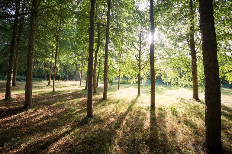 Wakehurst arboretum