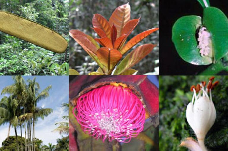 Species included giant rainforest trees, rare and beautiful orchids, spectacular palms, tiny fungi, wild coffees and an ancient aquatic plant.