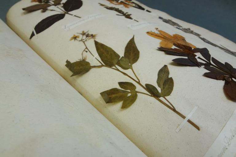 photo of pressed plant specimens