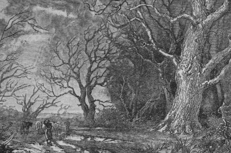 Sylvan Winter oak engraving
