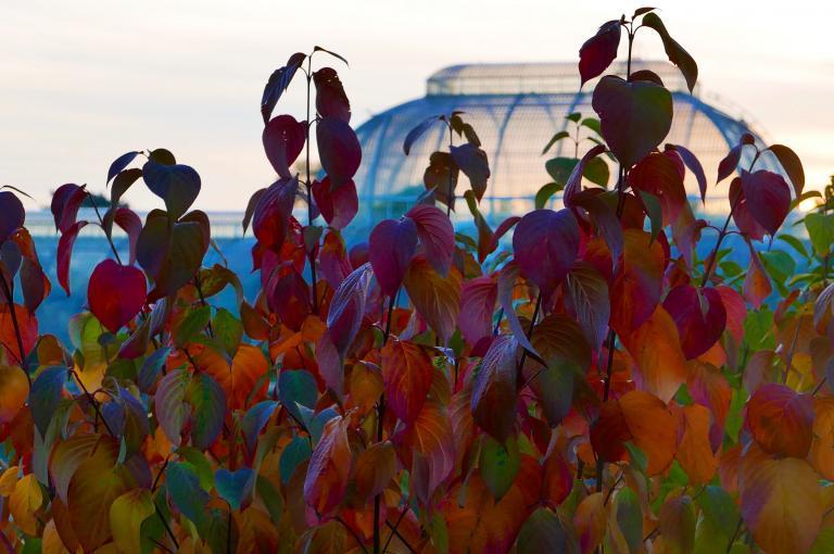 Autumn at Kew